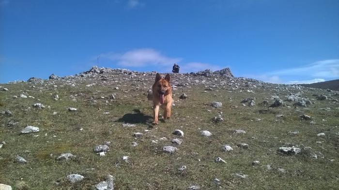 Dog Trekking, 3 giorni per saperne di più